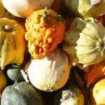 gourd-993293_1920